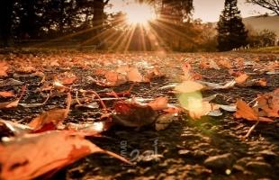 نصائح ثمينة لتقوية المناعة في فصل الخريف