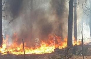 لليوم الثاني على التوالي: رجال الإطفاء يكافحون حرائق الغابات في اليونان
