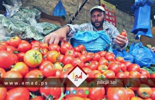 """مصدر لـ""""أمد"""": ارتفاع سعر البندورة في غزة طبيعي نتيجة الانتقال من فصل لآخر"""
