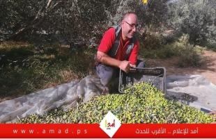 غزة: مجلس العمال يساند المزارعين في جني الزيتون لتعزيز الصمود - صور وفيديو